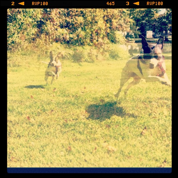 Zoe hops like a rabbit when she runs.