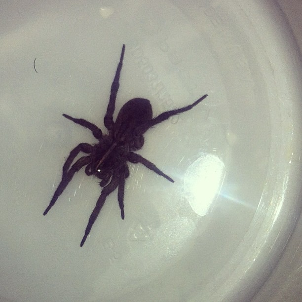 Just caught this extremely fast spider that is too big for my liking in my bathroom