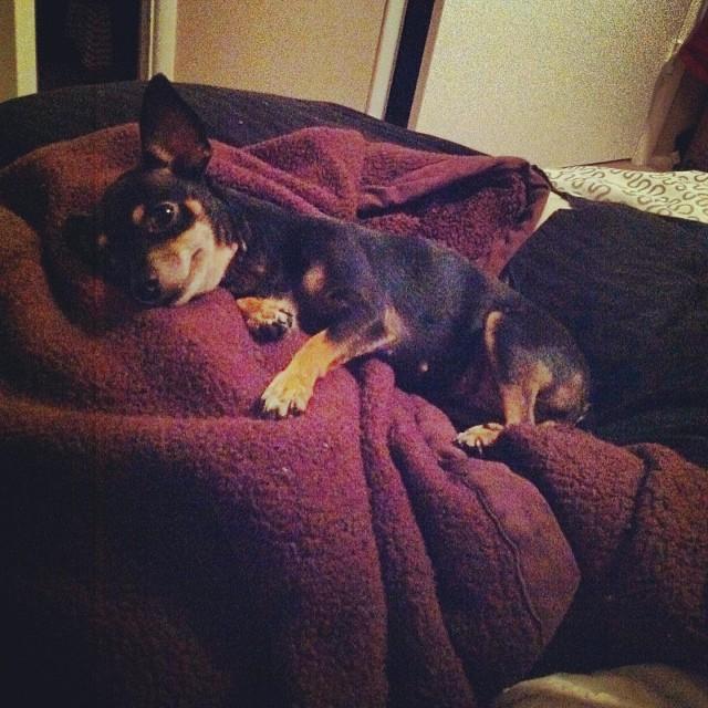 Always hogging the nearest blanket. #kingofthecastle