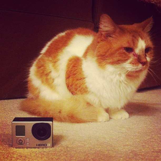 old cat new camera
