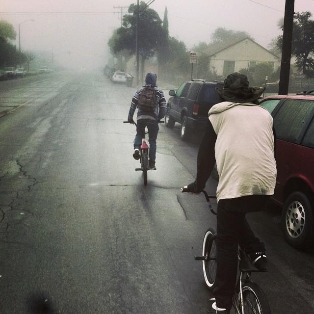 @pupnapx @cadgmoney into the fog