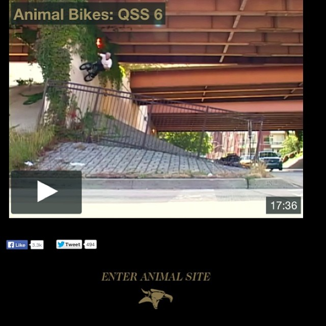 Head over to animalbikes.com and watch the new video. Came out so good