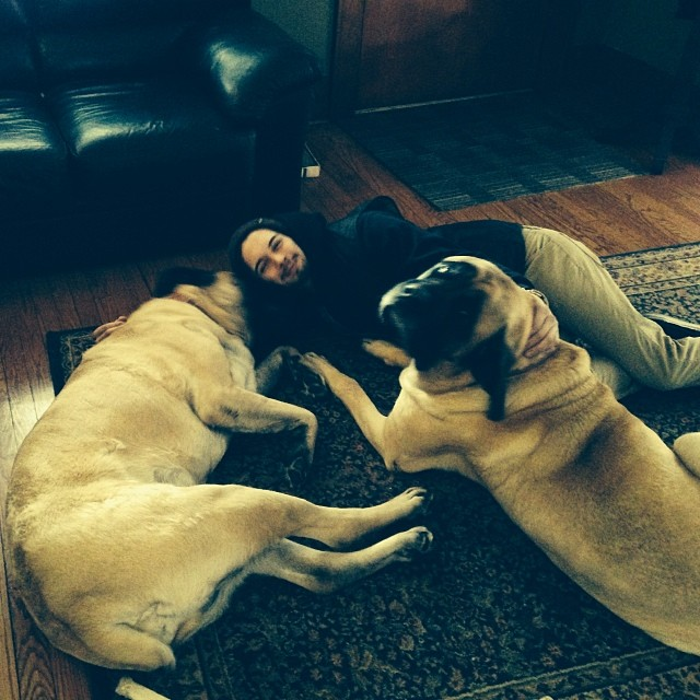 Loungin' with #mastiffs @jeffmurcko I'll keep em company for ya