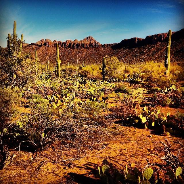 Desert just outside of Tucson