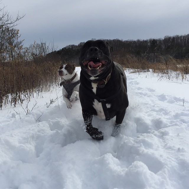 These two mutts love the snow