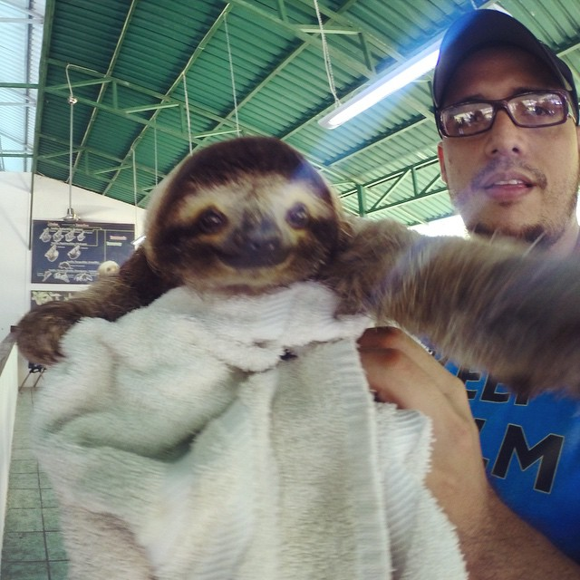 Flashback to this time last week when a baby sloth grabbed my GoPro and took a selfie.