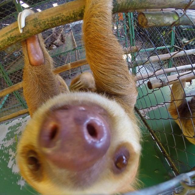 Live slow die whenever. #SlothSanctuaryofCostaRica